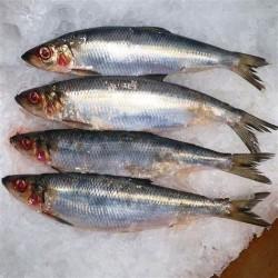 Sardine (bretagne) 1kg